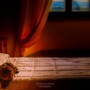 MvDF028 - Kat op bed Italie